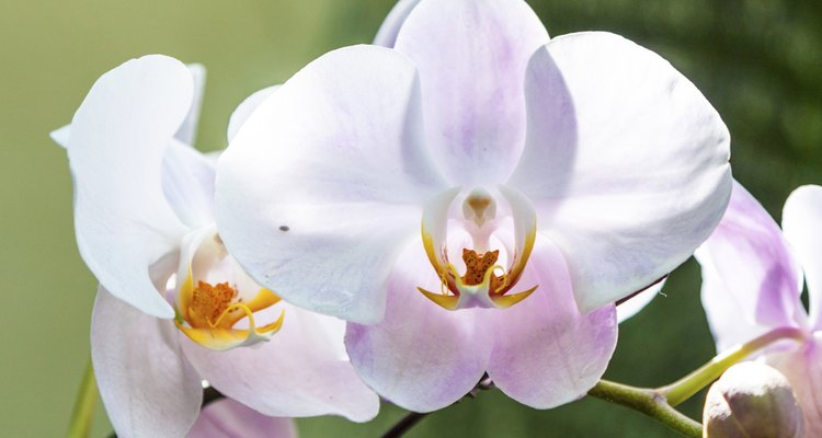 orchids in the botanical garden