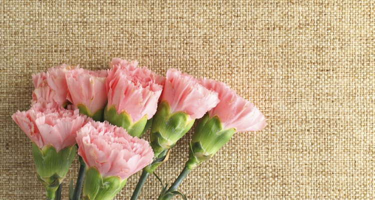Pink carnations flower for Mother day
