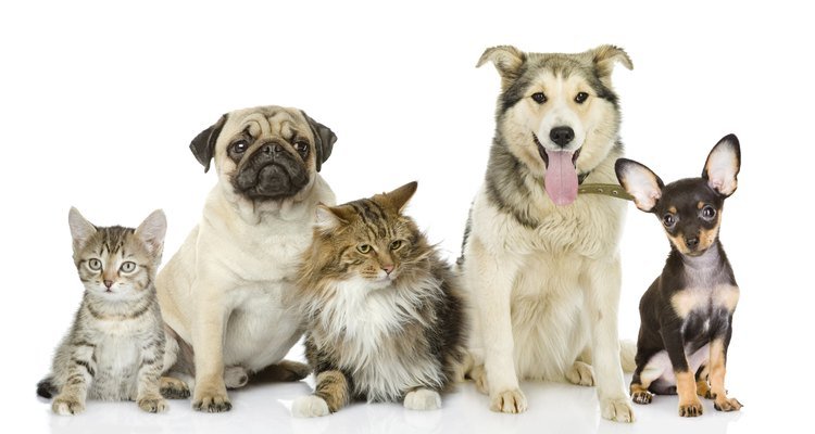 Las erupciones en la piel de las mascotas son comunes.