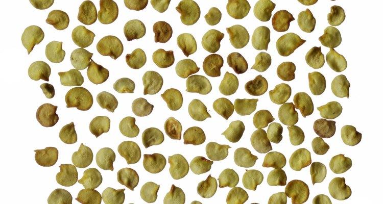 Você pode secar as sementes de pimenta para comer ou plantar depois