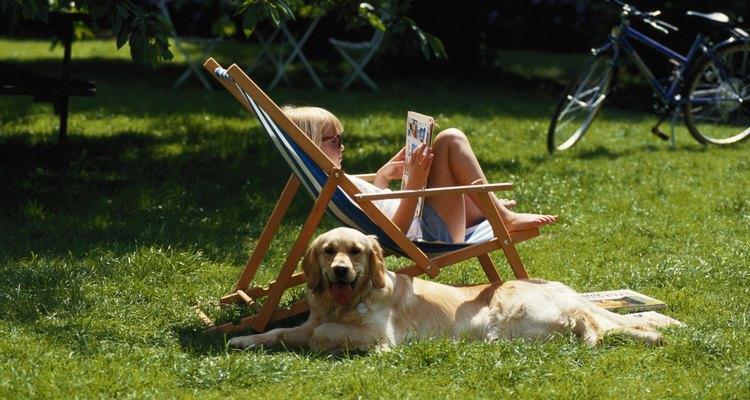 Pon un césped resistente, a prueba de perros, para que tanto tú como tu perro puedan disfrutar.