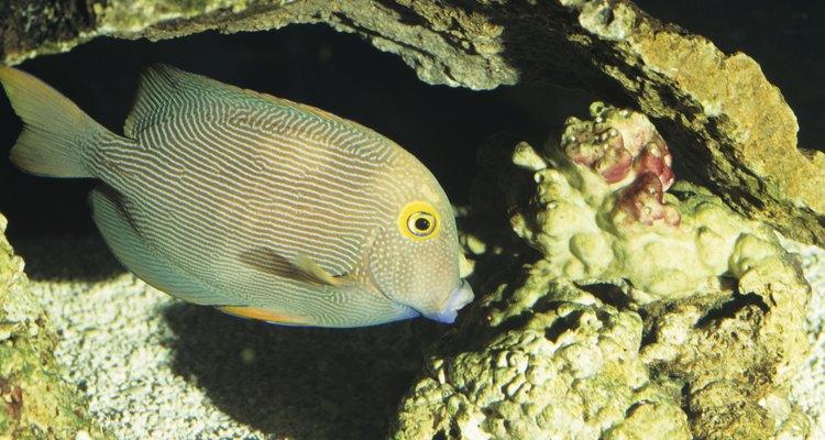 Corais dão textura e um belo visual ao aquário