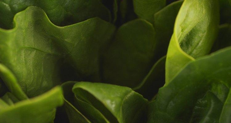 Las infestaciones graves pueden requerir la utilización de un pesticida para la erradicación completa.