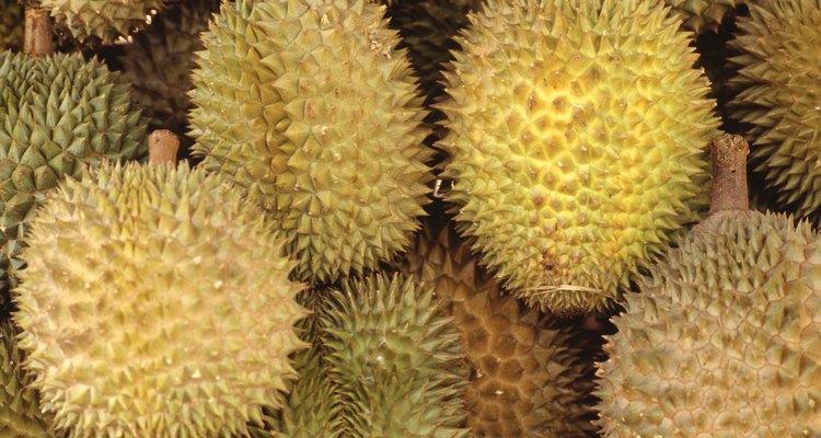 """El nombre durian viene del malayo """"duri"""" que significa espina."""