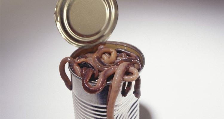 Descubra uma forma mais fácil de pegar minhocas