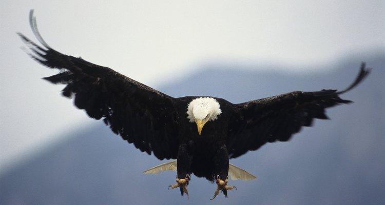 Los observadores de aves no se sentirán decepcionados por un viaje a Alaska interior.