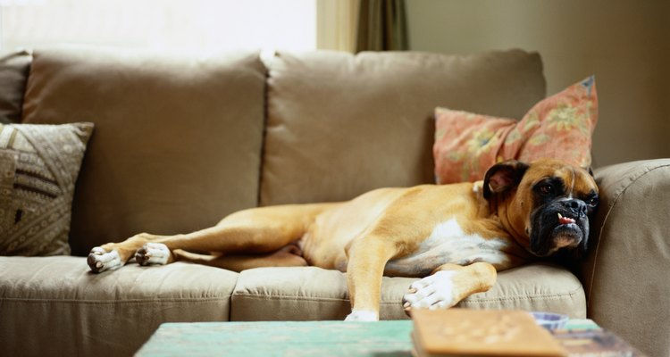 Si sospechas que tu perro tiene una enfermedad vestibular, llama al veterinario inmediatamente.
