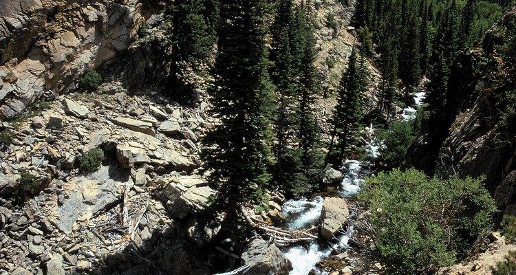 Al igual que en los Andes, las Montañas Rocosas de Colorado producen una maravillosa quinua negra.