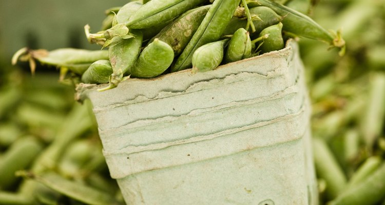 Beans vary in their purine content from high to moderate level.