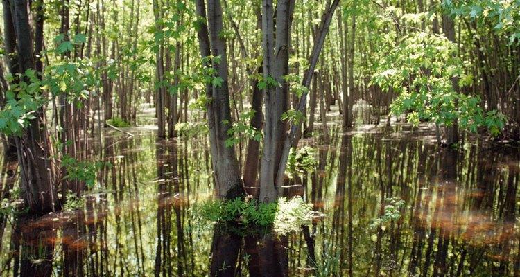 Las selvas tropicales son hogar de muchas especies amenazadas.