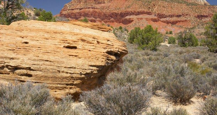 El calor del desierto y la falta de lluvias determinan los tipos de plantas que se desarrollan en estos lugares.