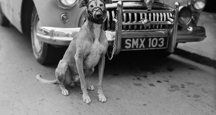 Los bozales no lastiman a los perros.