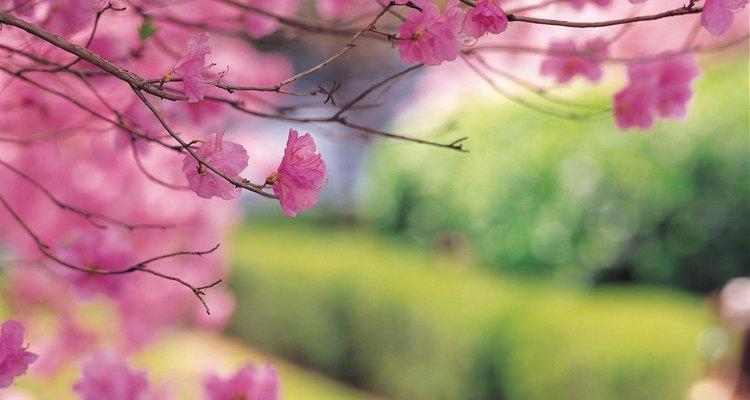 Flores vistosas y brillantes para atraer mariposas.