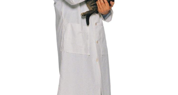 Um veterinário pode determinar a causa da baixa contagem de células brancas no sangue do seu gato