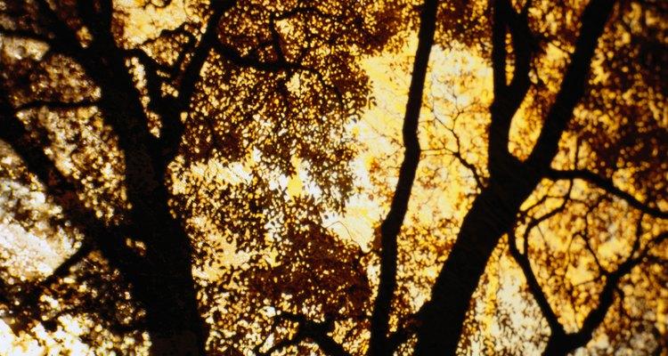 Pinta sobre las ramas podadas.