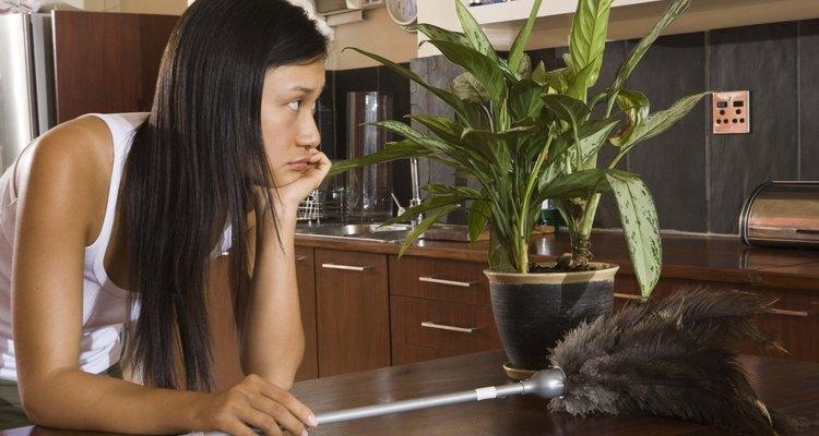 La limpieza regular ayudará a mantener los ácaros del polvo y su olor fuera de tu hogar.