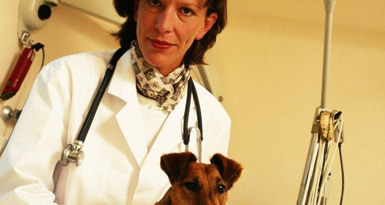 Os veterinários investem em equipamentos médicos para tratar animais