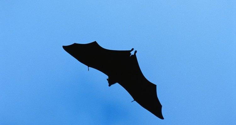 Según AnimalTourism.com, hay 47 especies diferentes de murciélagos en los Estados Unidos.