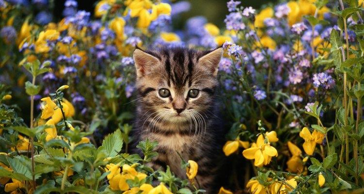 Los gatos son lindos pero pueden hacer que tu patio huela muy mal.