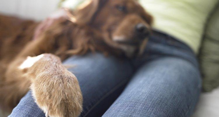 As almofadas das patas de um cão funcionam como uma sola de sapato