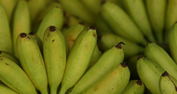 La banana es conocida como plátano en algunas regiones.