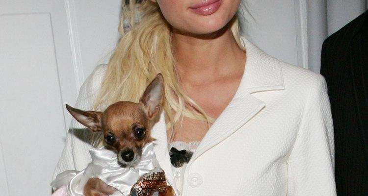 Paris Hilton ha hecho una pequeña mansión para sus doce chihuahuas.