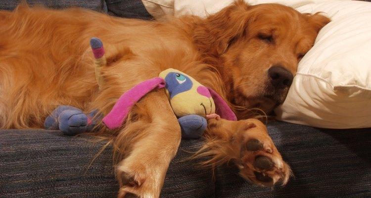 Efeitos colaterais do Revolution em cães