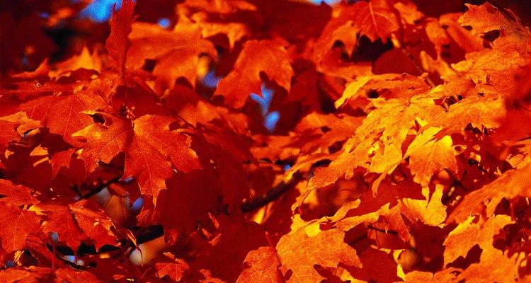 Brattleboro, Vermont es un destino ideal en otoño, cuando los árboles son ricos en color.