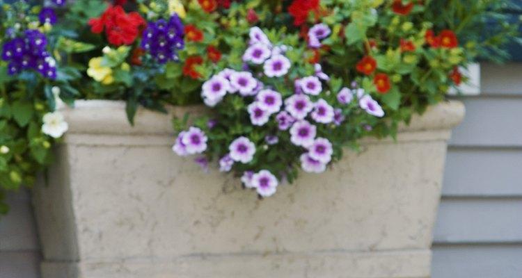 Cultiva plantas perennes en macetas para tener colores naturales.