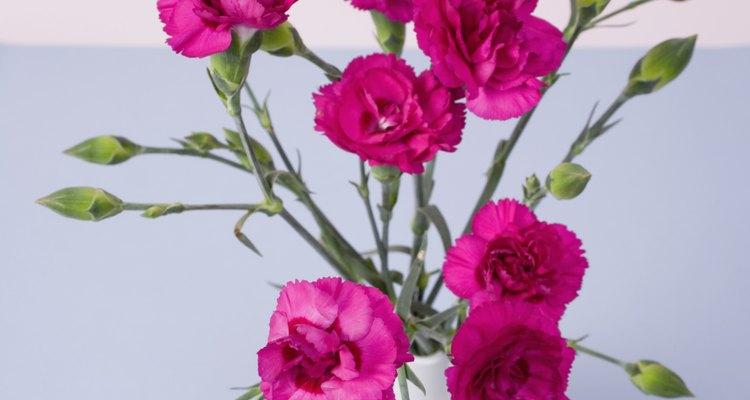 Cualquier tamaño de recipiente funciona para sembrar semillas de clavel siempre y cuando haya suficiente drenaje.