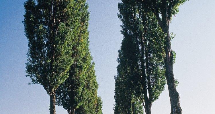 Escoge ramas intactas y sin indicios visibles de enfermedad.