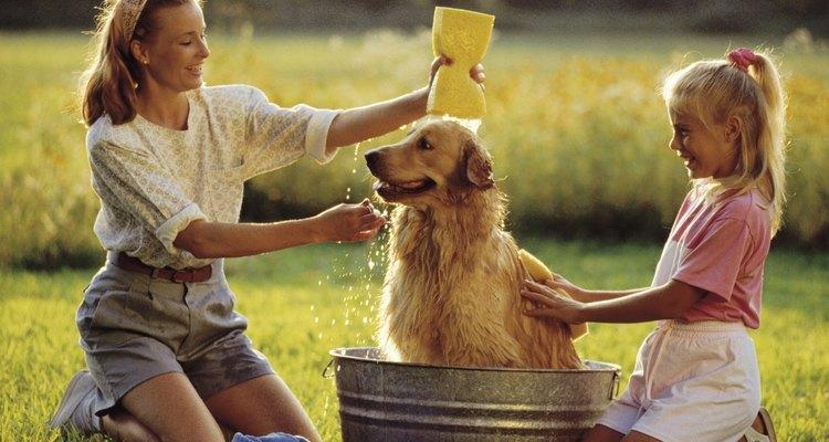 Você pode usar o sabonete líquido Johnson's Baby para dar banho no seu cachorro