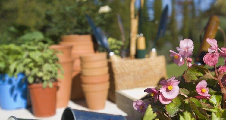 Cultivar pimentões pode ser uma experiência gratificante