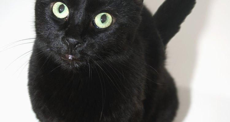 """O narrador do conto """"O gato preto"""" é um bom exemplo de narrador não confiável"""