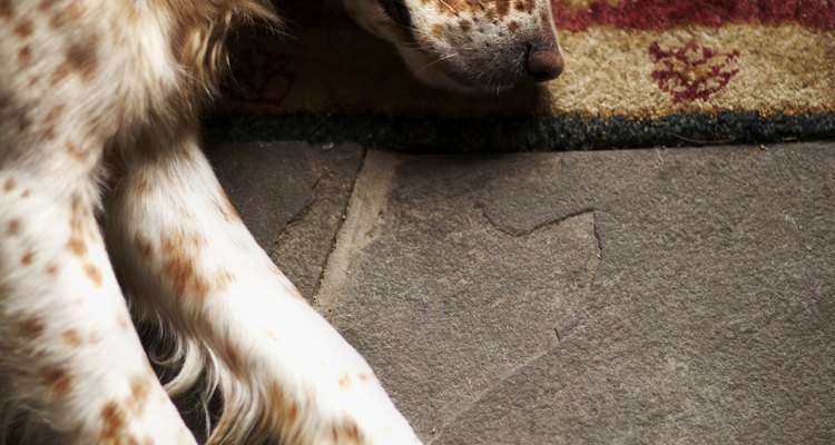 Utiliza esta rutina durante una o dos semanas y el perro debe dormir tranquilo por la noche.