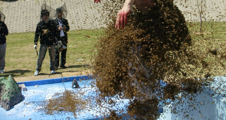 Gnats can swarm a person, seeking moisture from sweat.