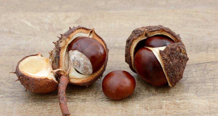 chestnuts lying on wood