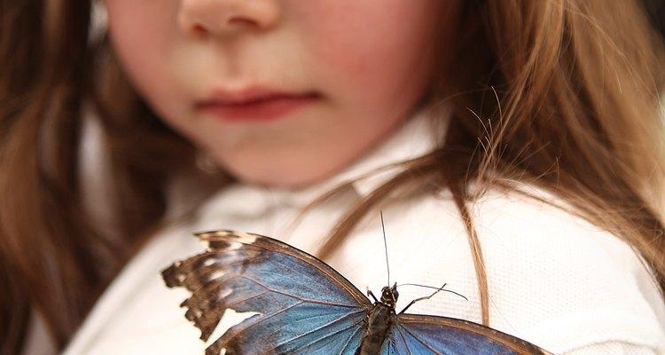 Um projeto de ciências sobre os sentidos da borboleta explora como os insetos enxergam, escutam, sentem gostos e tato e como sentem cheiros