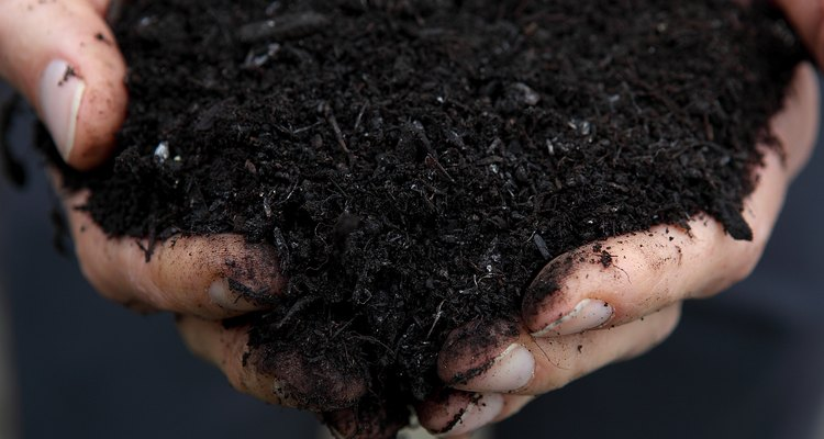 Well-aged compost is the best source of nutrients for cucumbers.