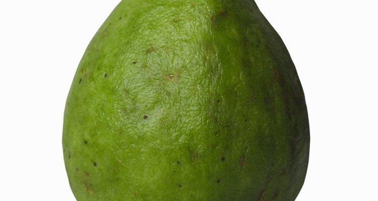 Enraiza los esquejes de tallo de las plantas de guayaba para crear nuevas plantas frutales.