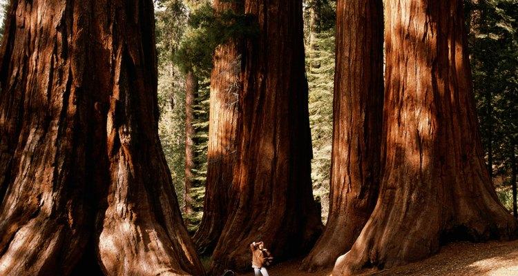 Camina a las cascadas en el Sequoia National Forest.