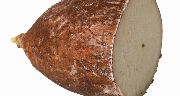 La casava se conoce también como yuca, mandioca o tapioca.