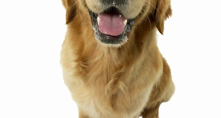 Lleva a tu mascota al veterinario.