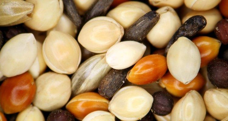 Las semillas de cártamo se usan en mezclas para alimento de aves.