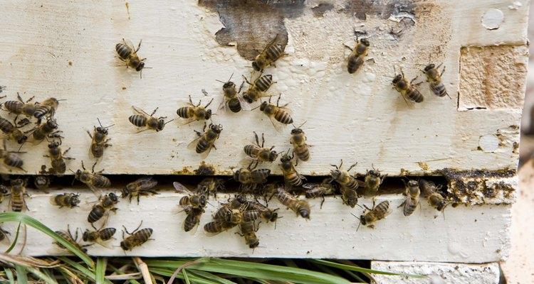 La apicultura da miel para tu familia y poliniza tu jardín.