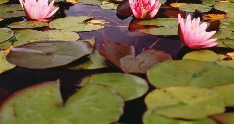 Mantenha um controle sobre a vegetação nas represas