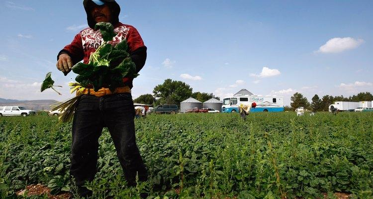 Los trabajadores agrícolas reciben atención de salud en las clínicas móviles de los Centros de Salud Familiar en Colorado en 2009.