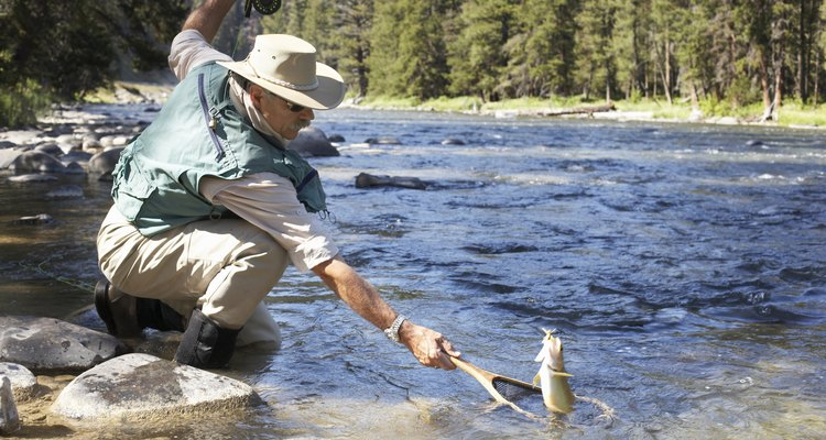 Trout are a prized freshwater species and are delicious when grilled, baked or broiled.