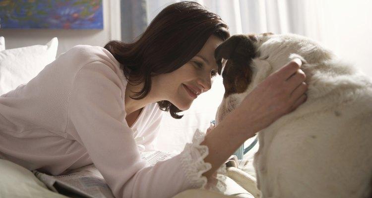 Saiba como aliviar a congestão nasal do seu cachorro
