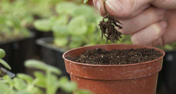 Las plantas en maceta y de exterior necesitan los mismos elementos básicos para prosperar.